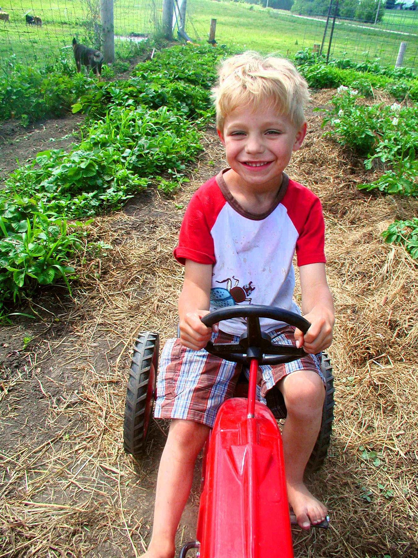My little farmer - Sugar Creek FarmSugar Creek Farm