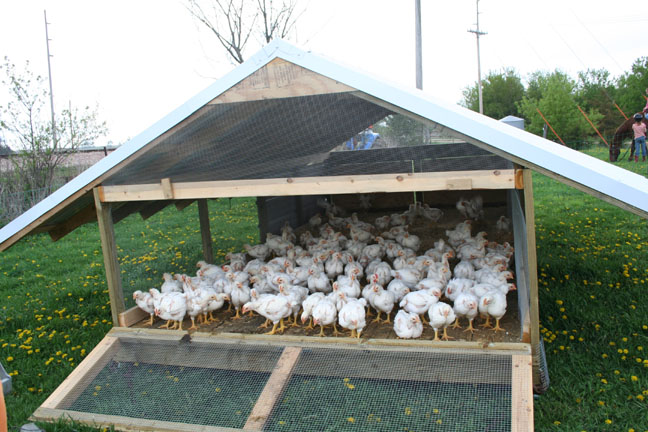The Best Part Of Waking Up Sugar Creek Farmsugar Creek Farm